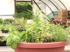 How to Plant a Herb Pot in 9 Steps
