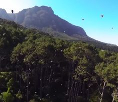 Look at: Drone Fights off Swarm of Bees... - http://zerodriftmedia.com/look-at-drone-fights-off-swarm-of-bees/