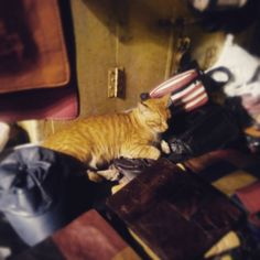 Romel Dias snapped up this tabby cat in the Kala Ghoda precinct for Meow Mumbai #meowmumbai #catdiaries