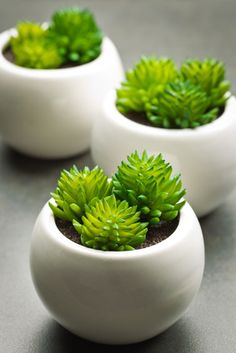 With so many spring celebrations to plan, it's essential to have some great DIY spring party favors on hand for guests to take home as a sweet remembrance of the party. We love these mini potted succulents!