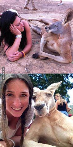 Kangaroos get more girl than you