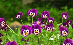 Funny Looking Flowers