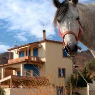 1-2 Horses, Animals, Viajes, Animales, Animaux, Animal, Animais, Horse