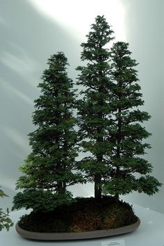 Bonsaï Forest