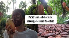 Cacao farm and chocolate making process in Colombia!