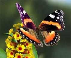 beaux papillons  | beau papillon posè sur une jolie fleur