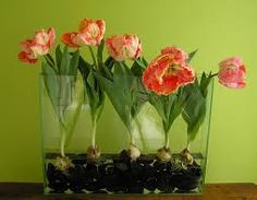 flowers you can grow in a vase - Google Search