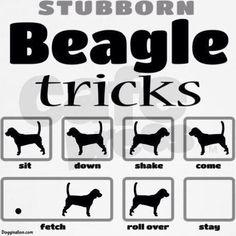 Hahaha Beagle Tricks Funny
