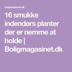 16 smukke indendørs planter der er nemme at holde | Boligmagasinet.dk
