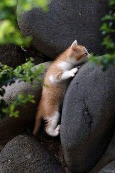 """super-luckycollectiongarden: """" kitten climbing rocks """""""