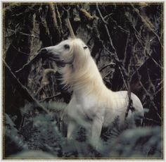 Unicorn in a forest.