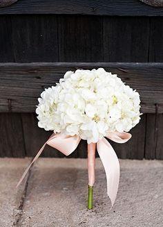 Flower girl hydrangea