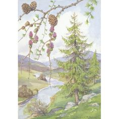 Margaret Tarrant - Larch