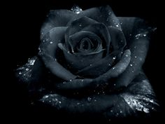 gothic art | Rose Gothic by ~Zefir4ik on deviantART