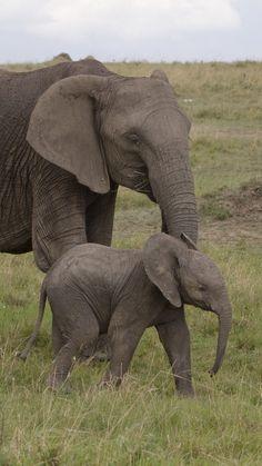 elephant, baby elephant, love, africa, nature