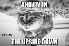 Poor Kitty in the Upside Down Stranger Things fans will get this :) #strangerthings #catmeme #meme #catmemes #memes #funny #cute