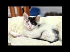 83 special needs kittens found homes through Saving Grace Rescue in 2014. Featuring photos by The Furrtographer Music: Way Below by Free Peoples