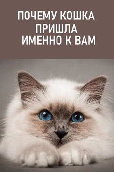 Psychology, Health Fitness, Pets, Illustration, Animals, Grandma Sayings, Psicologia, Animaux, Psych