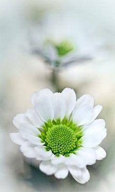** green  white.