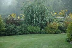 Low Maintenance Garden in A Garden For All by Kathy Diemer http://agardenforall.com