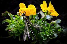 Dragonfly, Vleugels, Bloemen, Plant, Tuin