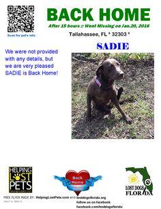 Helping Lost Pets   Dog - Labrador Retriever - Back Home