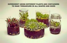 Idea how to make own terrarium