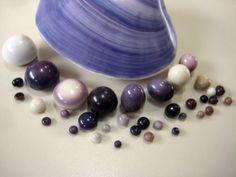 Quahog pearls and polished shell