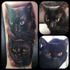 Black Cats photo realistic