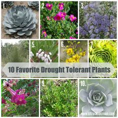Drought tolerant plants are a necessity when planning a Central Valley garden! These ten have been gathered by a local nursery, so they're a sure win!