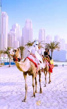 Camel Riding in Dubai. #dubai #travel #tour