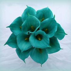 Teal Calla Lillies?