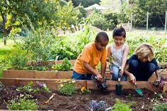 community gardening for kids Organic Soil, Grow Organic, Organic Gardening Tips, Terraced Vegetable Garden, Starting A Garden, Seed Starting, Kids Events, Healthy Kids, Happy Healthy