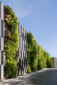 green walls and graphics Via Botani, Shukhumvit 47 Bangkok Thailand Landscape Architecture design by OPNBX Openbox Architects Natural Privacy Fences, Privacy Screen Outdoor, Modern Roof Design, Fence Design, Landscape Architecture Design, Roof Architecture, Vertical Green Wall, Green Facade, Natural Stone Wall