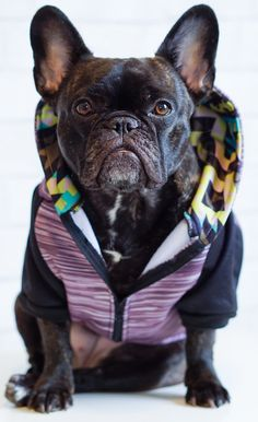Fast Deliver Cute 3d Bulldog Stripe Pet Hoodie Autumn Winter Buttons Warm Dog Puppy Clothes Large Medium Small Dog Clothes Pets Supplies Pet Products