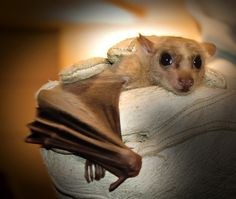 And not only are they the cutest. Oh, no. Bats are wonderfully useful creatures to have around.