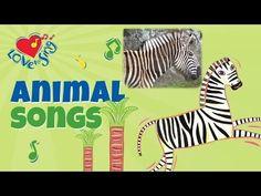 The Stripy Zebra | Zebra Song | Children Love to Sing Kids Animal Songs - YouTube