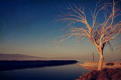 Your One and Only by Photographer Laurie Search, Salton Sea