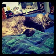 yoda's getting his beauty sleep :)