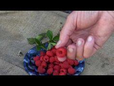 Raspberry Bush, Raspberry Plants, Raspberries, Serving Bowls, Eat, Raspberry, Mixing Bowls, Bowls