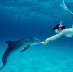 Swim with dolphins!