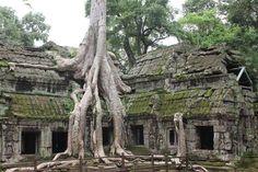nice Ta Prohm Cambodia. | by millicand@rocketm......