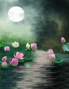Purchase Lake Lotus Moon Photography Backdrops Photo Props Studio Background from Ann Pekin Pekin on OpenSky. Moonlight Photography, Moon Photography, Background For Photography, Photography Backdrops, Photography Backgrounds, Photo Backdrops, Background Images, Flower Pictures, Nature Pictures