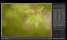 Tips for Editing Nature Photos in Lightroom