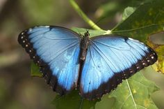 http://www.fairchildgarden.org/uploads/images/Wings_of_the_Tropics/_BT10154.jpg