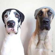 Hipster Dogs  http://app.viraltag.com/content/popular-posts?utm_content=buffera675a&utm_medium=social&utm_source=pinterest.com&utm_campaign=buffer #dogs