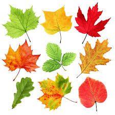 Znalezione Obrazy Dla Zapytania Kolorowe Liscie Do Wydruku Colorful Leaves Leaves Autumn Art