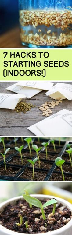 Seed Gardening Seed Hacks Seed Starting Hacks Gardening Vegetable Garden He Seed Gardening Seed Hacks Seed Starting Hacks Gardening Vegetable Garden He See more by visiting the photo