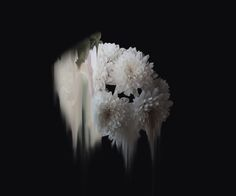 Abstract Flowers by Simone Truong – Fubiz™
