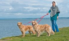 Groupon - Furhaven No Tangle Two Dog Pet Leash. Groupon deal price: $6.99